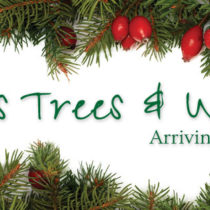 Christmas Trees and Wreaths Arriving November 25th
