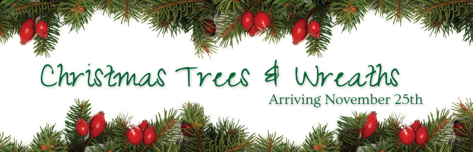 Christmas Trees and Wreaths arriving November 25